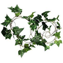 Ivy Lengths
